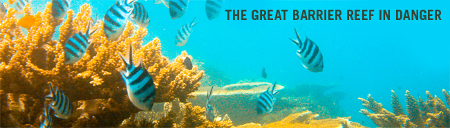 Draft great barrier reef biodiversity conservation strategy 2012