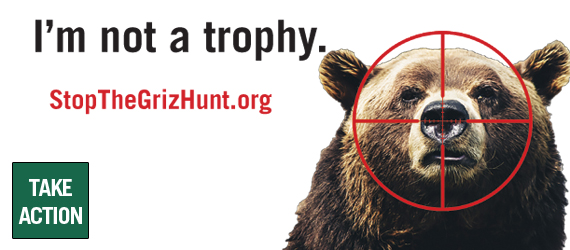 Stop the grizzly bear hunt